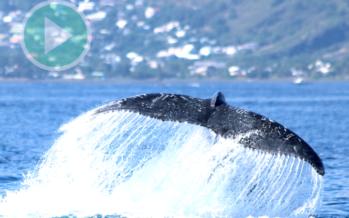 Sept infos pour devenir un boss de la baleine