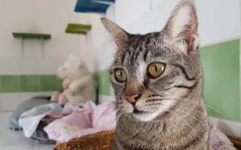 Journée internationale du chat : Quel minou pour vous ?