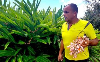 Kakouk, le tarzan de l'Entre-Deux qui soigne avec des plantes