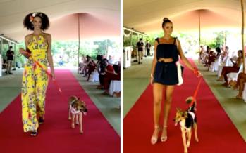 Fashion dogs : Les chiens de la SPA du Sud stars d'un défilé de mode