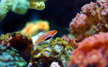 Fête des mères : L'adoption d'un corail, une idée cadeau originale et utile