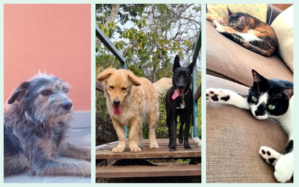 Journée mondiale des animaux : on vous raconte l'histoire de nos boules de poils