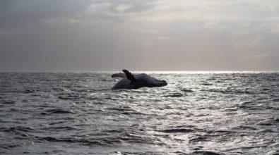 Une baleine et son baleineau observés au large de notre île